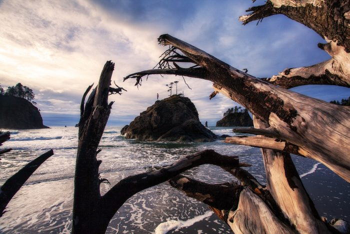 15. Second Beach framed by driftwood is such a beautiful, picture perfect scene.
