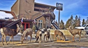 Most People Don't Know These Small Towns In Wyoming Have AMAZING Restaurants