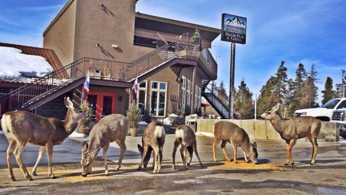 8. Wind River Brewing Company, Pinedale