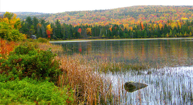 5. The autumn leaves in the White Mountains