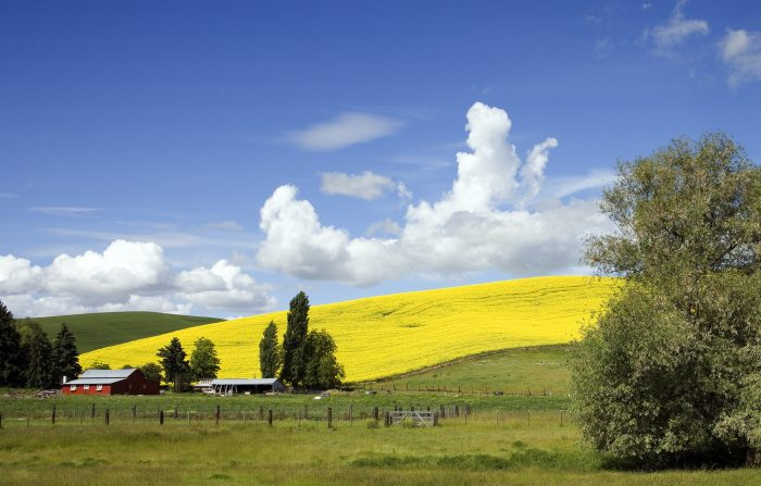1. This vibrant rural scene is made striking by the contrast between the hillside and blue sky.