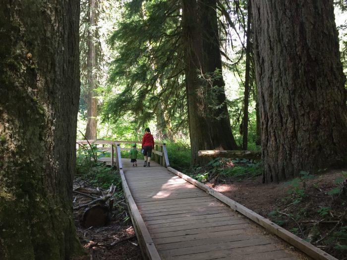 4. Grove of the Patriarch's Loop (Mount Rainier National Park)