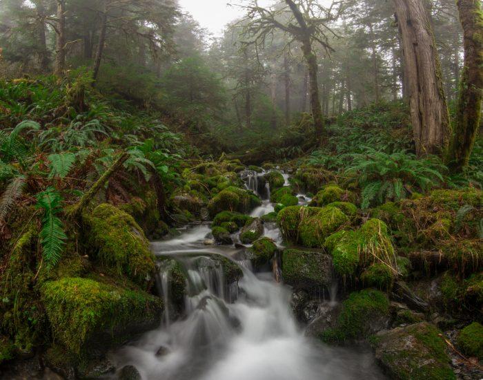 1. Lake Quinault Rainforest Tours