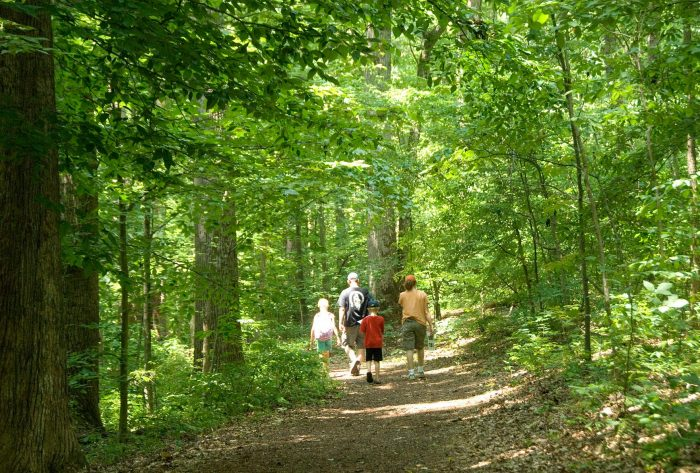 Or follow the five miles of paths where you'll be surrounded by a plethora of flora and fauna.