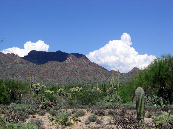 3. The Old Pueblo is well-known for its scenic desert views.