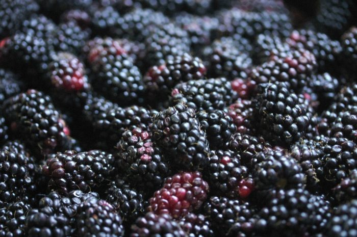 10. We created the perfect berry.