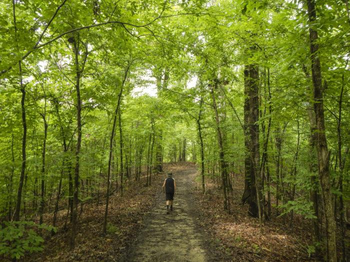 7. Village Creek State Park (Wynne)