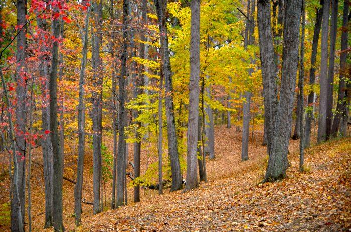3. A deciduous woodland paradise at Patapsco Valley State Park.