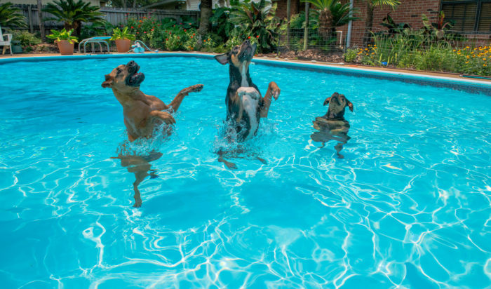 Survive the dog days of summer by practically living in the pool.