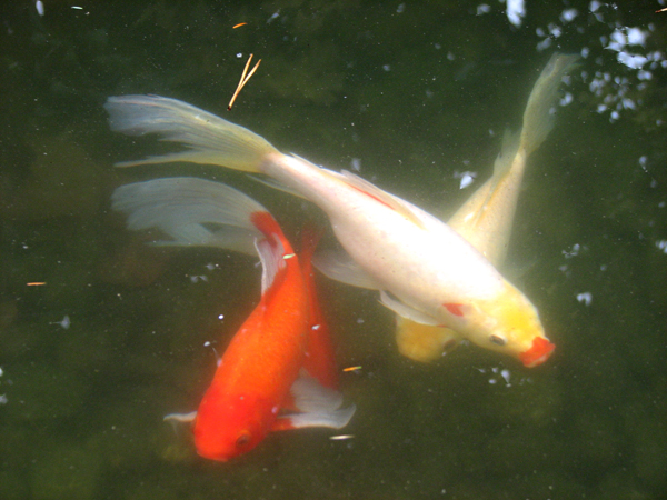 ...and say hello to the fish in the pond.