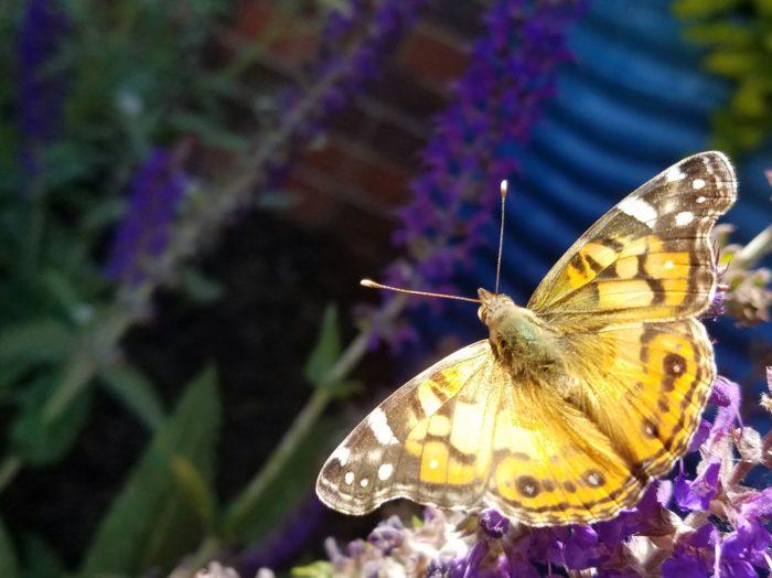 10. Beautiful butterfly