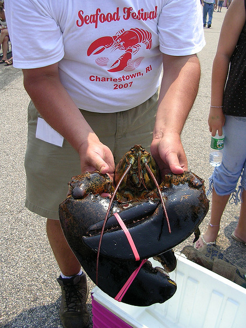 14. Attend some of the state's uniquely amazing festivals, like Charlestown's Annual Seafood Festival.