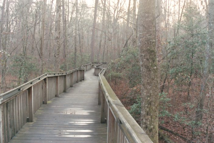 8. Talmadge Butler Boardwalk