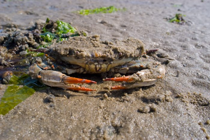 2. Go Crabbing