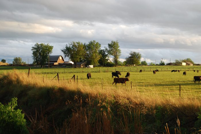 3. This quintessential farm scene captures rural Idaho in its most natural state.