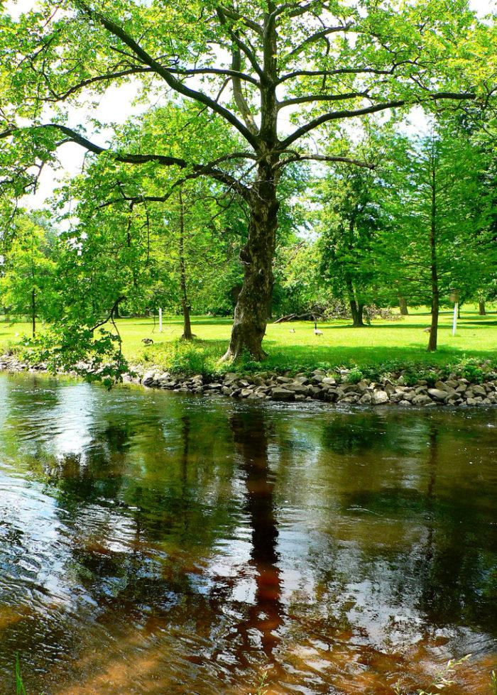 11. St Jones River