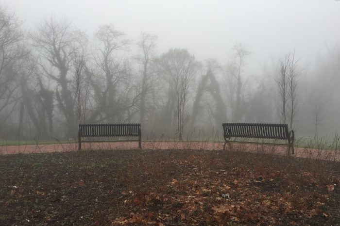 7. The Fog In This Park