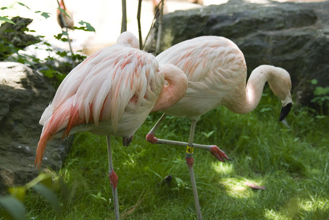 7. Spend the rest of your afternoon at Roger Williams Park and Zoo in Providence.
