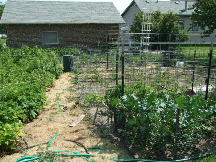 2. Vegetable gardens