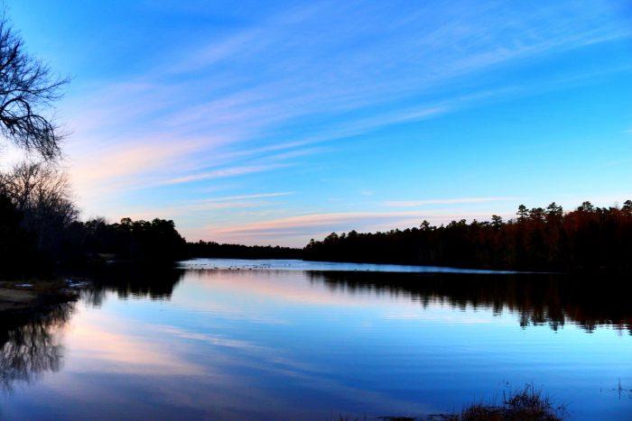 2. Wharton State Forest, Hammonton