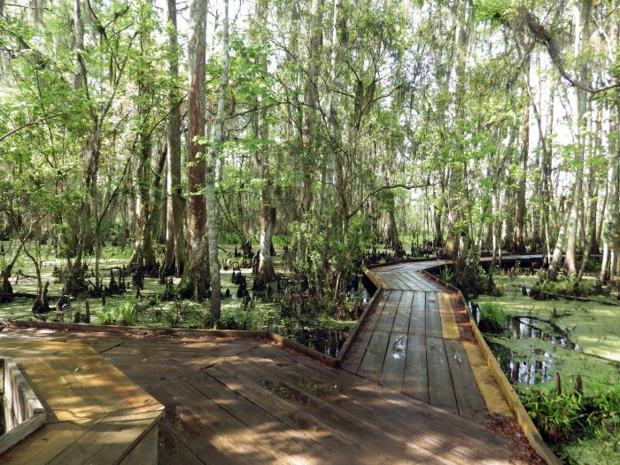 The trail also offers a beautiful sense of the swamp.