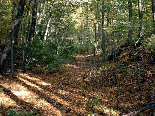 10. Browning Woods Trail, South Kingstown