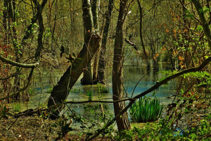 5. A serene swamp scene along the Baltimore & Annapolis Trail.