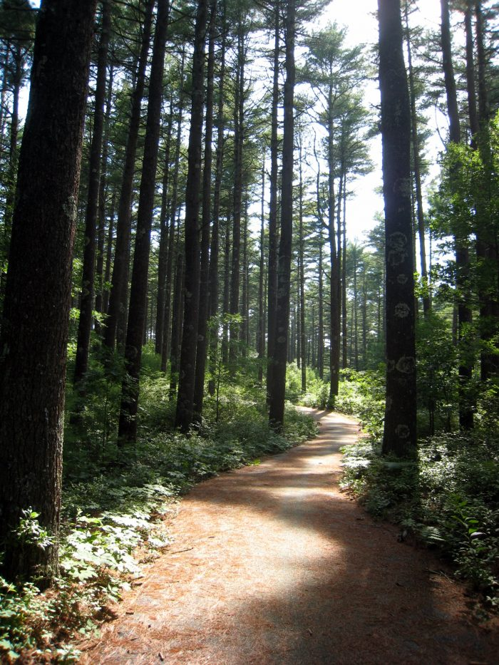 12. The Easthead Loop in Myles Standish Forest, Carver, is a easy 2.5-mile path that curves around East Head Reservoir.