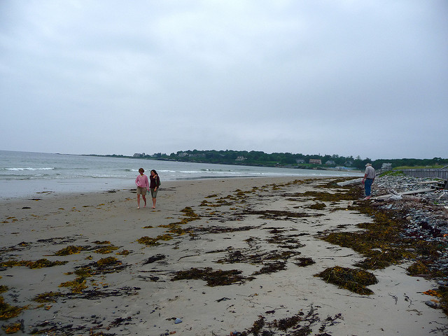 1. Picking up seaweed off the beach.