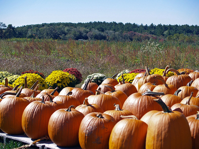9. Autumn in Rhode Island brings it's own farm fun and pick-your-own pumpkin patches are a must have experience.