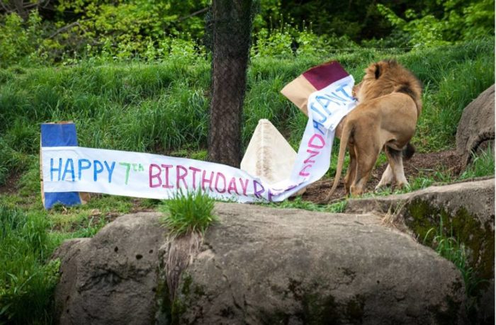 Celebrate a resident's birthday then plan your own kids' birthday party at the zoo.