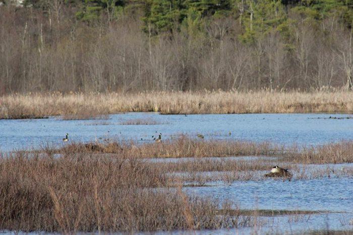 3. Visit Buzzard Swamp Wildlife Viewing Area.