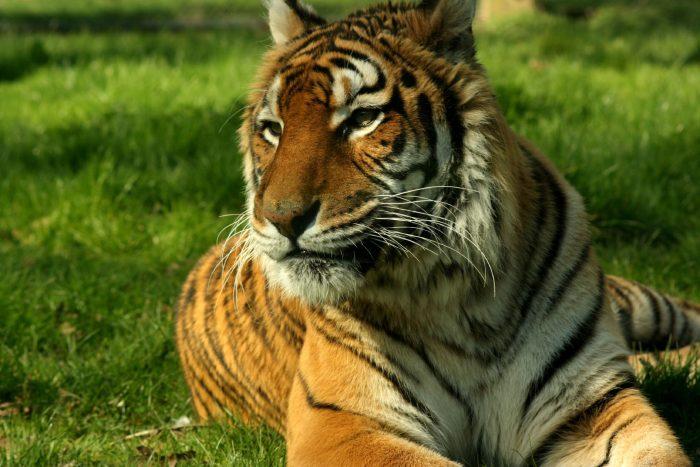 3. Wild Animal Safari – Strafford, Mo.