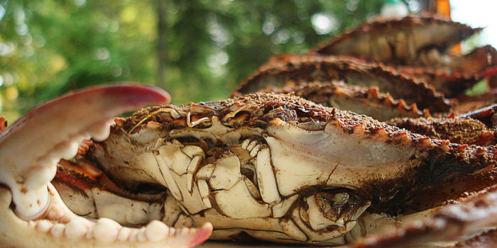 12. And oh yeah... don't forget the crabs. The sinfully delicious, mouthwatering, can't get enough of 'em crabs.