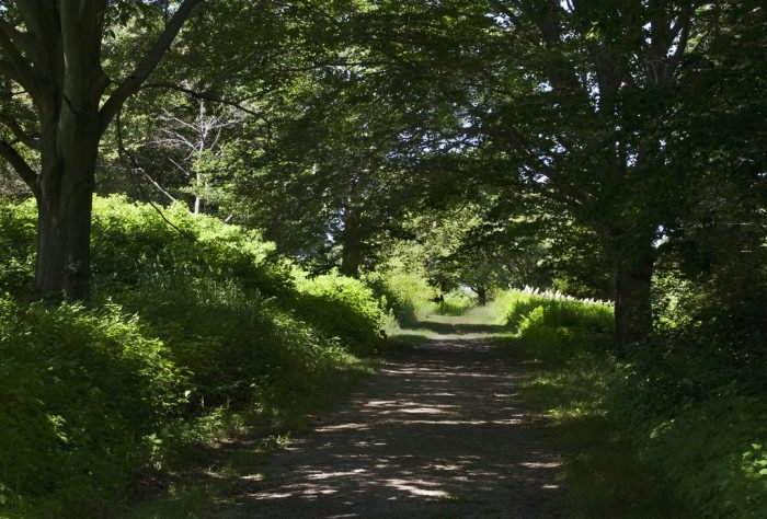 7. The World's End Reservation Trail in Hingham crosses 4.5 miles of beautiful coastal and riverine habitat. It's a dog-friendly trail, so bring your pooch along.