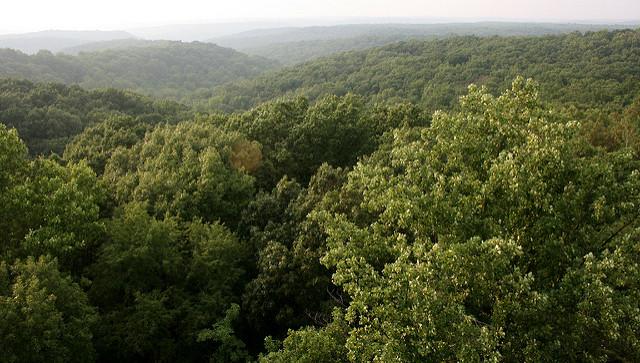hickory ridge tower
