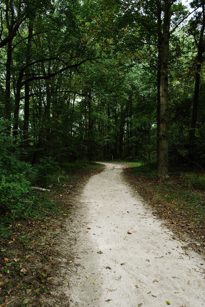 13. Cross Country Trail - Killen's Pond State Park