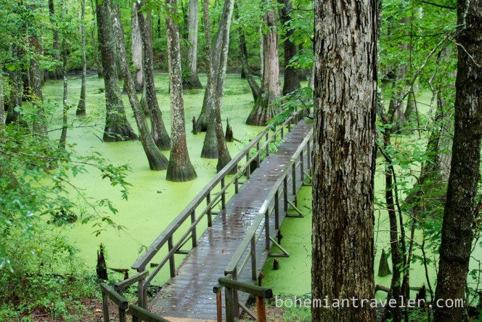 4. Located at milepost 122 of the Natchez Trace Parkway, this cypress swamp includes a self-guided trail that is approximately one-half mile, allowing plenty of time for an alligator sighting – which has been known to happen.