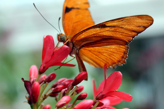 Stop by the Butterfly Forest.