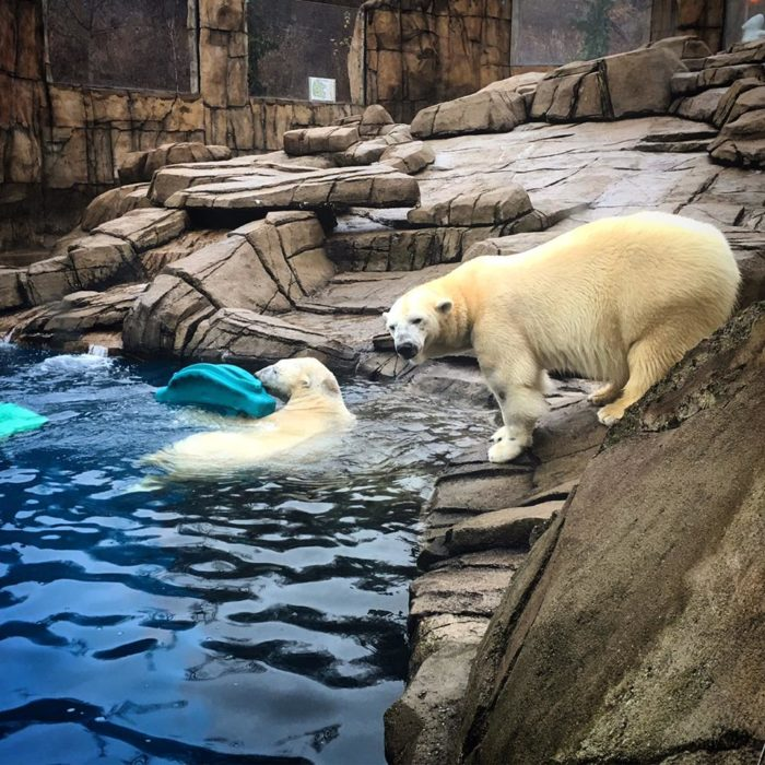 ...and maybe catch a glimpse of the polar bears.