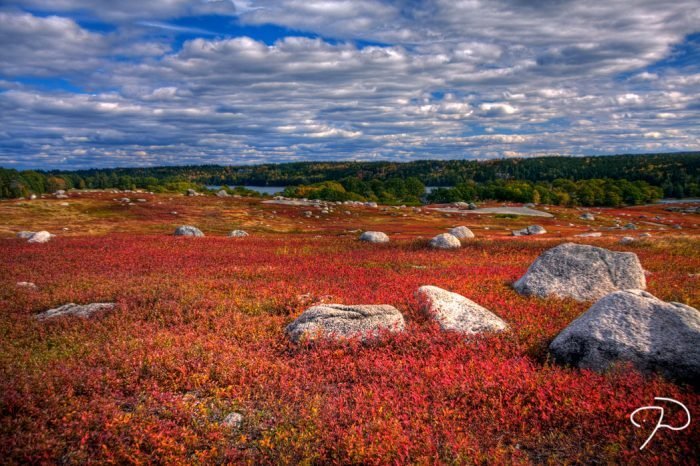 7. Maine: The Blueberry Barrens