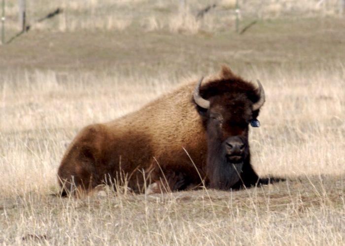 10. Bear River State Park