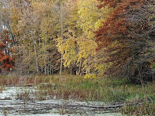 6. The Preserve Trails @ Fox Island Park (Fort Wayne)