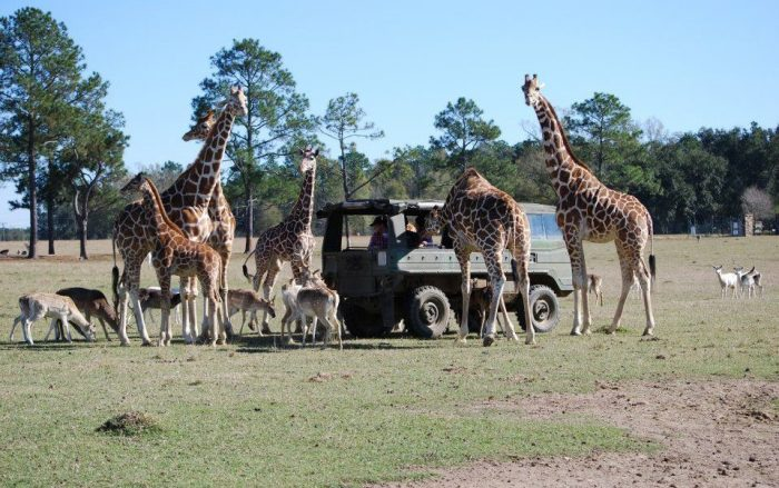 The Private Pinzgauer tours allow you to get even more up close and personal with the wide variety of wildlife in the area.