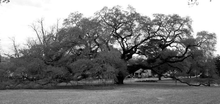 10. The Big Oak, Thomasville