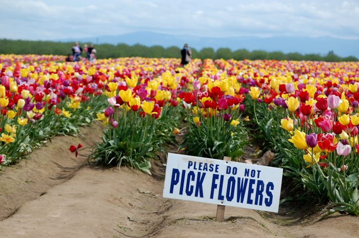 7. Picking flowers is illegal in Mount Vernon.