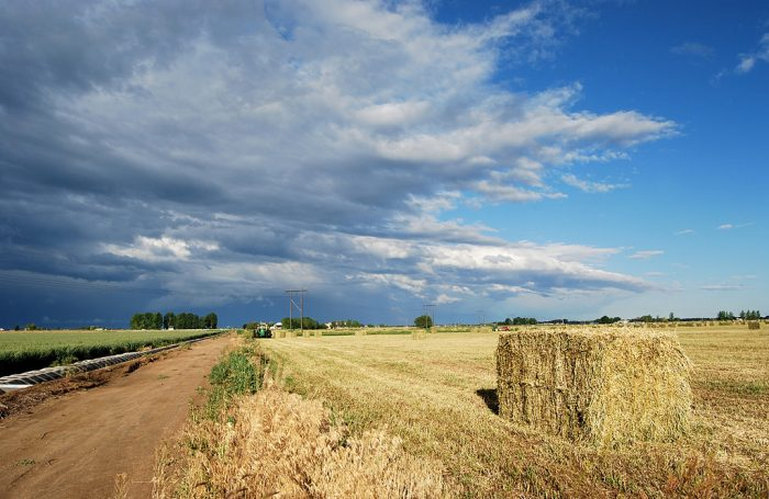 5. This Nampa hay field is a majestic scene as a harvest season storm rolls in.