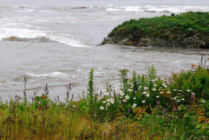 5. The Reversing Falls, West Pembroke