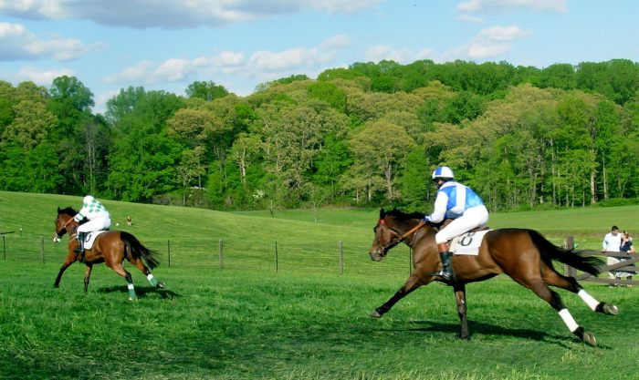 6. Cheer on your favorites at the Winterthur Point-to-Point