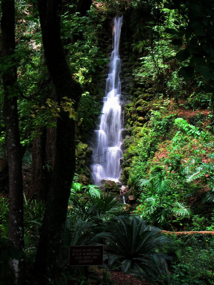 Beautiful Waterfalls At Florida's Rainbow Springs State Park House Plants